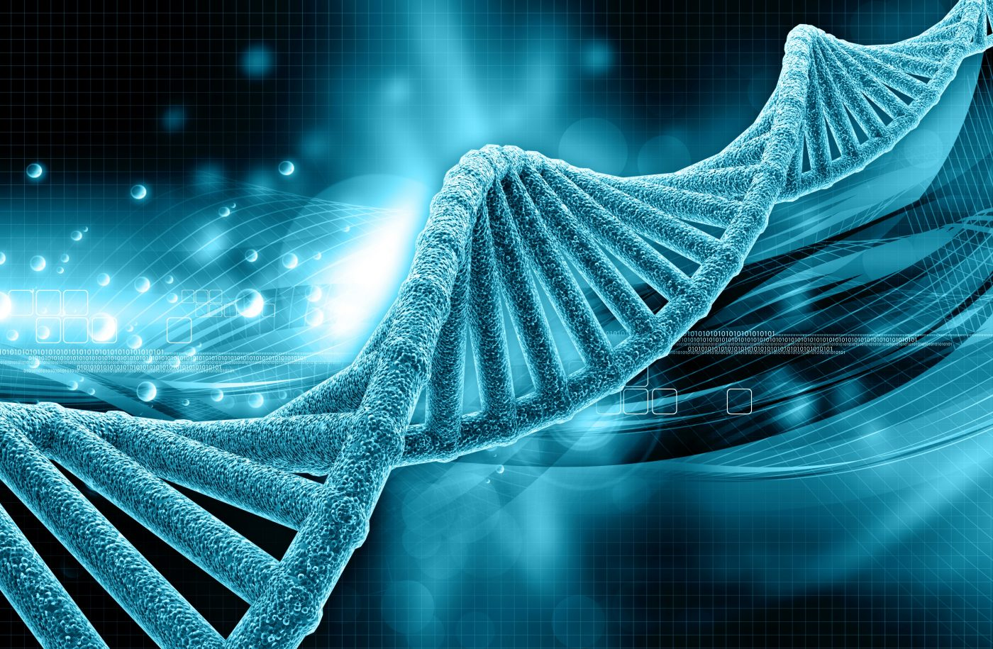 Study Finds Novel Gene Involved in Muscular Dystrophy