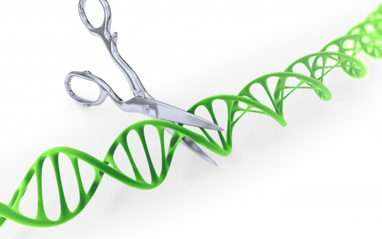 CRISPR/Cas9 gene editing in stem cells might become a future treatment for Duchenne muscular dystrophy.