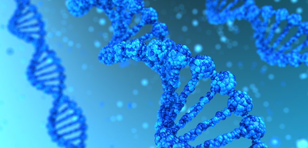 Shortened Telomeres Linked to Muscle Degeneration in Duchenne, Study Finds