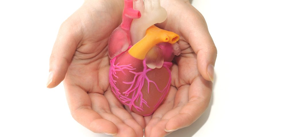 Scientists Review Research on Cardiac-Scarring Cells That May Aid Muscular Dystrophy Therapies