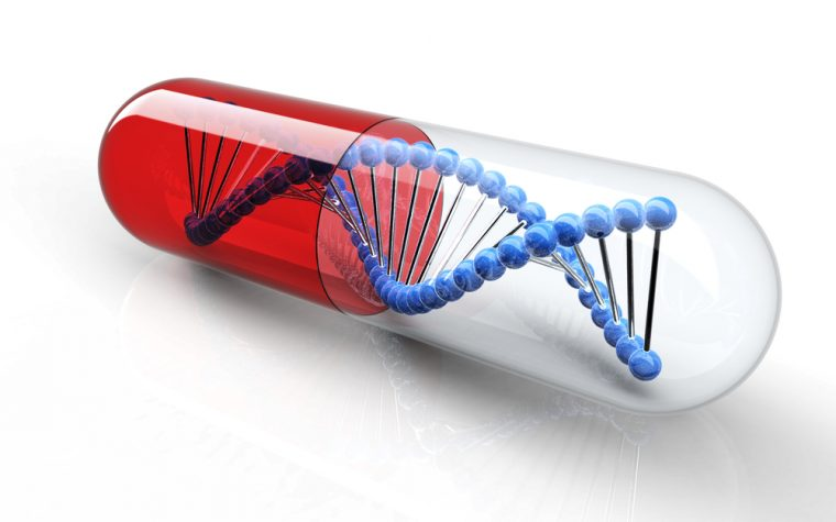 Gene Therapy Approach Using HAC Vector May Work with Dystrophin Gene, Study Suggests