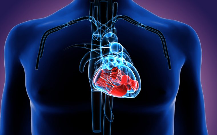 Researchers Isolate ST2 Protein as Potential Biomarker for Heart Disease in Duchenne Muscular Dystrophy